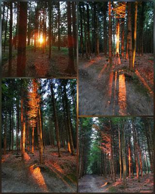 Sonnenuntergangseffekte Wald Bramberg