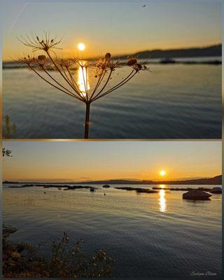 goldene Sonnenuntergangsstimmung am Murtensee