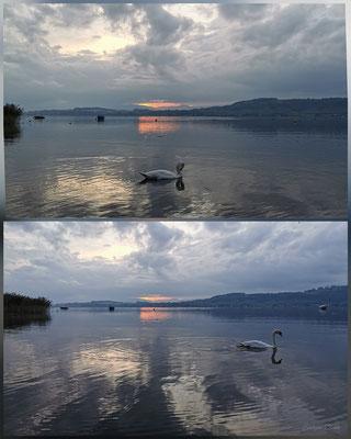Sonnenuntergang mit Schwan in Muntelier