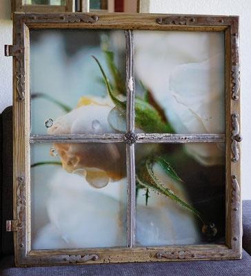 uraltes aufgepepptes Fenster mit Rosenfoto