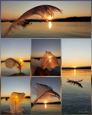 Federn im Sonnenuntergang Murtensee