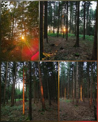 beleuchtete Baumstämme vom Sonnenuntergang Bramberg
