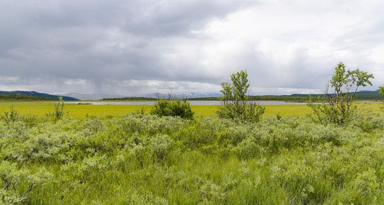 Tourbière de la réserve naturelle de Fokstua. La plus grande du sud du pays.