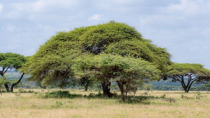 Paysage de la savanne vers le Kenya