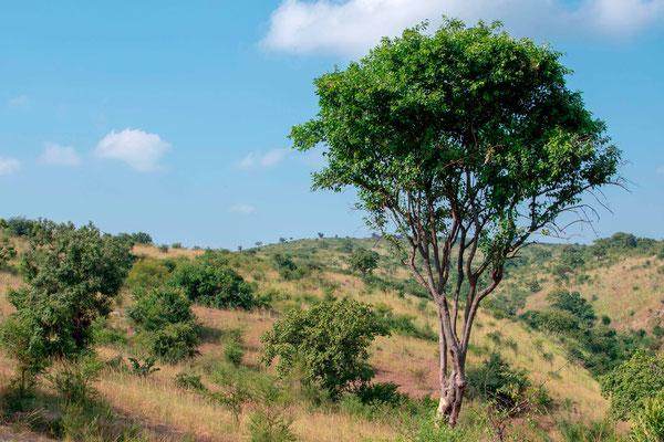 Hill in Murchisson Falls