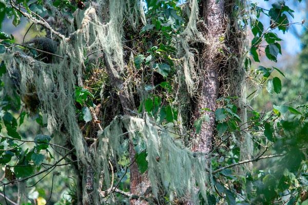 Echantillons de plantes épypytes sur un arbre...