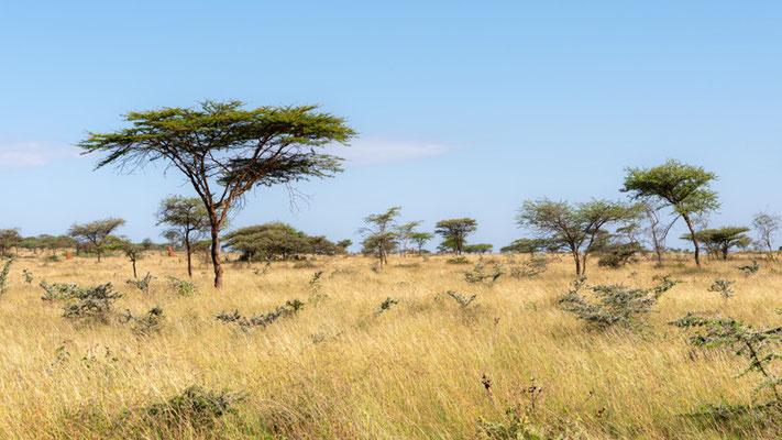 Savanne de Yabello