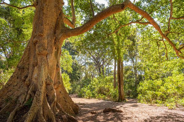 Forêt semi-décidue de Bishangari.