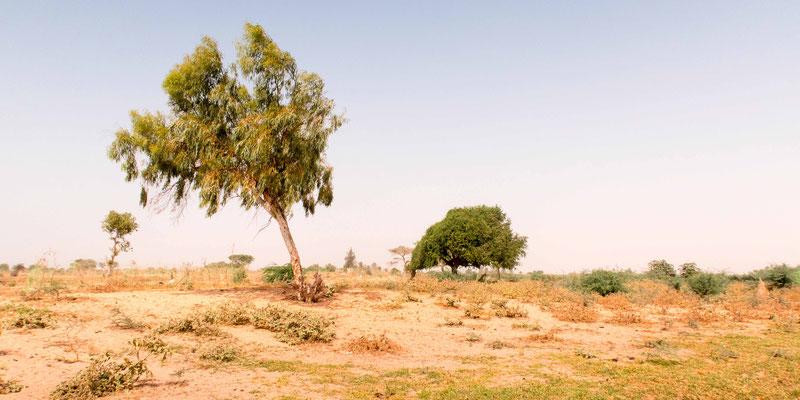 Landscape around Saint-Louis wastewater treatment plant