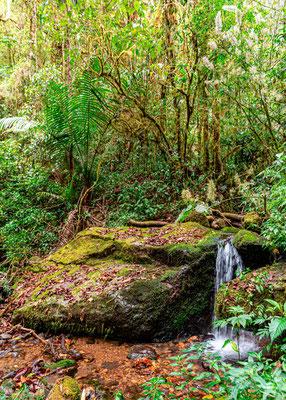 San Gerardo forest