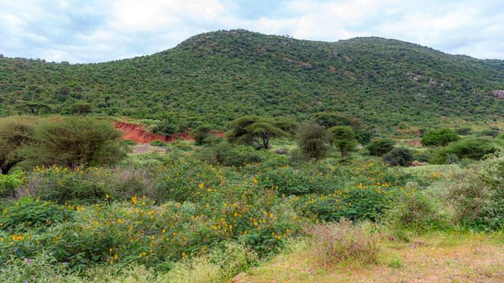 Paysage proche de la frontière kenyane.