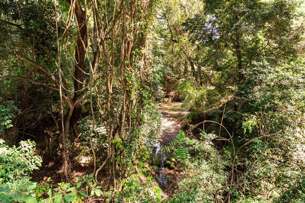 Petit vallon dans la forêt de Bishangari