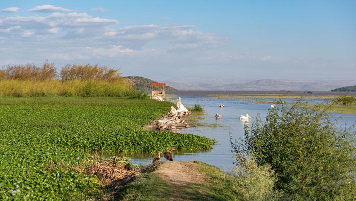 Vue sur le lac Ziway