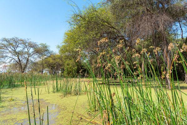 Marécage bordant le lac Chamo