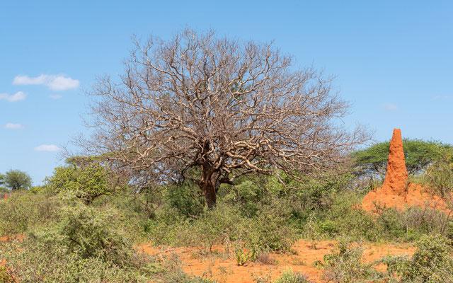 Landscape around Yabello
