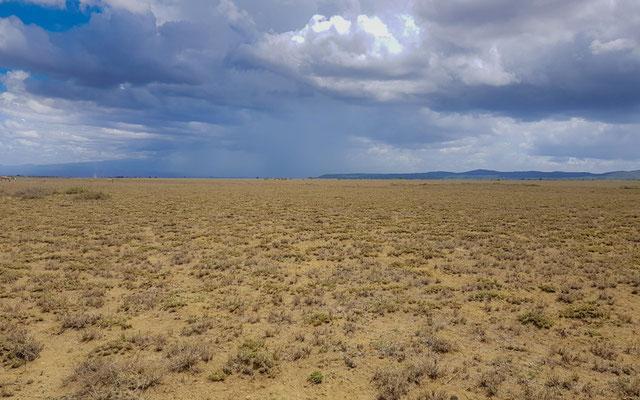 Plaine de Asogati, à l'est du village d'Engikaret. A la recherche infructueuse d'une Alouette( Alouette de Beesley Chersomanes beesleyi) endémique ne vivant que sur ces quelques kilomètres carré.