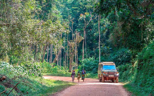 """La forêt de Bwindi côté plaine appelé """"the Neck"""". Splendide!"""