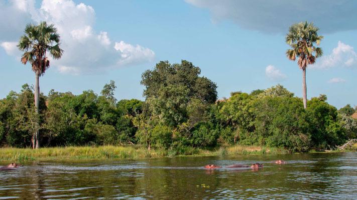 Rives du fleuve du Nil Victoria