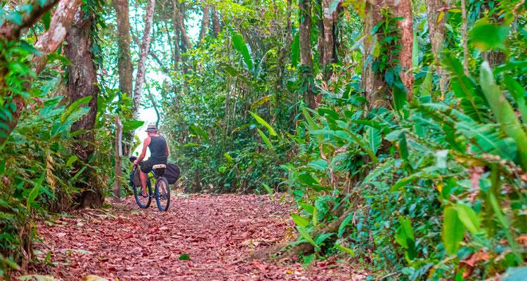 Cycliste sur le chemin reliant le village de Tortuguero et l'aéroport