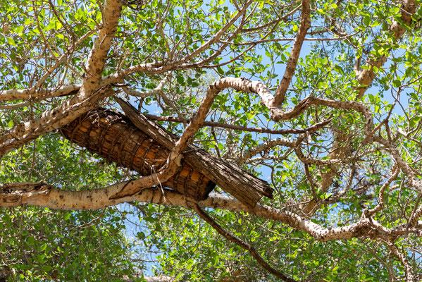 Ruche artisanale. Forêt de Bishangari. Le miel est délicieux en Ethiopie.
