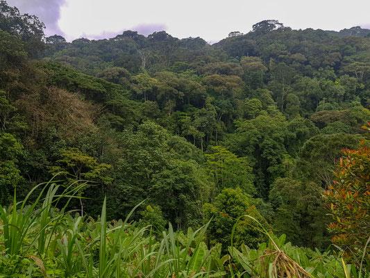 Début d'une forêt en réserve dans les montagnes Uluguru