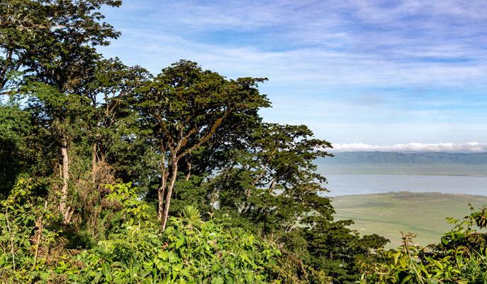 Vue sur le cratère de N'gorongoro