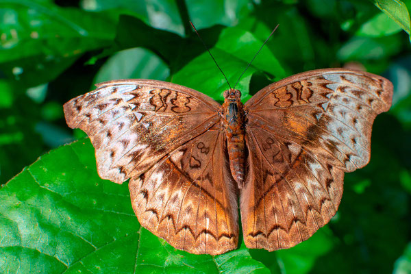 Undefined Butterfly
