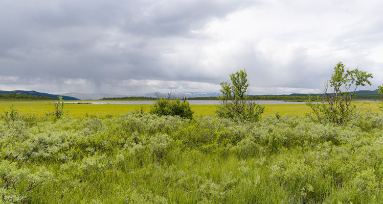Fokstua nature reserve bog. The largest in the south of the country.