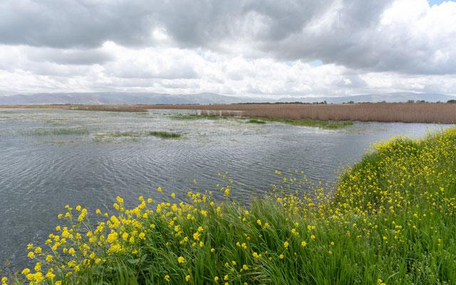 Le marais d'Aammiq, bien innondé.