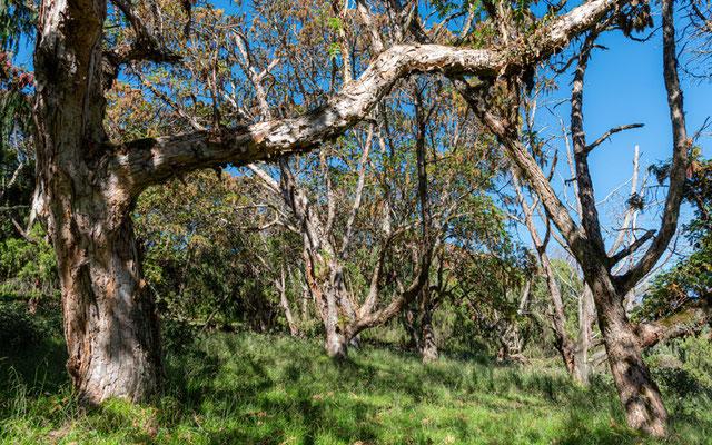 Dinsho forest