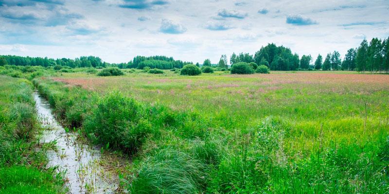 Paysage de campagne autour de Bialowieza