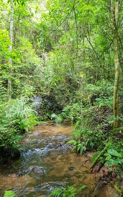 Ambiance dans la forêt tropicale