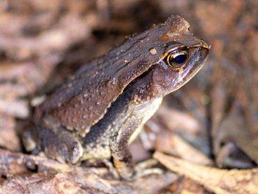 Undefined frog