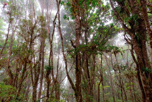 Forêt d'altitude dans la brume