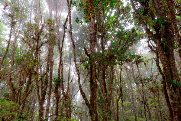 High altitude forest in the mist