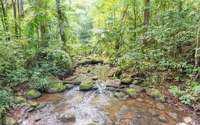 La Selva forest