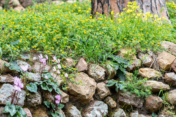 Old vegetated wall