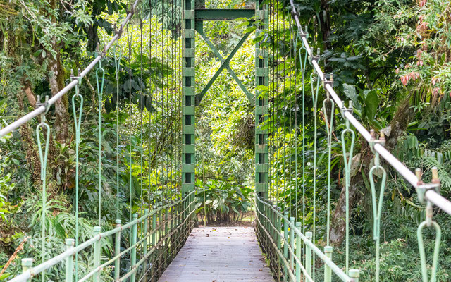 The famous hanging bridge linking the centre's buildings to the forest