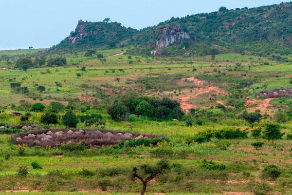 Village Karamojong, peuple majoritaire du Nord-Est de l'Ouganda, sédentarisé récemment
