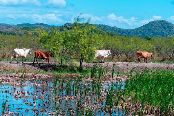 Paysage typique de Rancho Humo