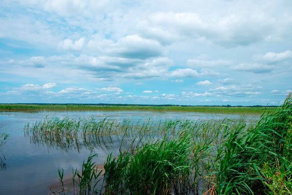 Zone humide vers le lac de Siemanovka