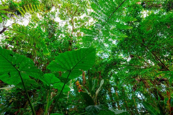 Forêt secondaire autour de arenal observatory lodge