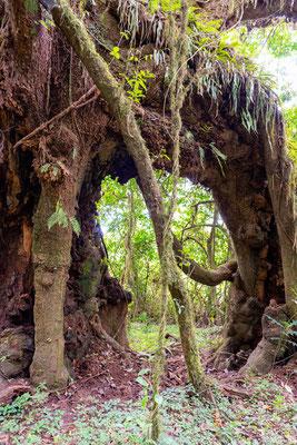 La magie de la forêt d'Harenna