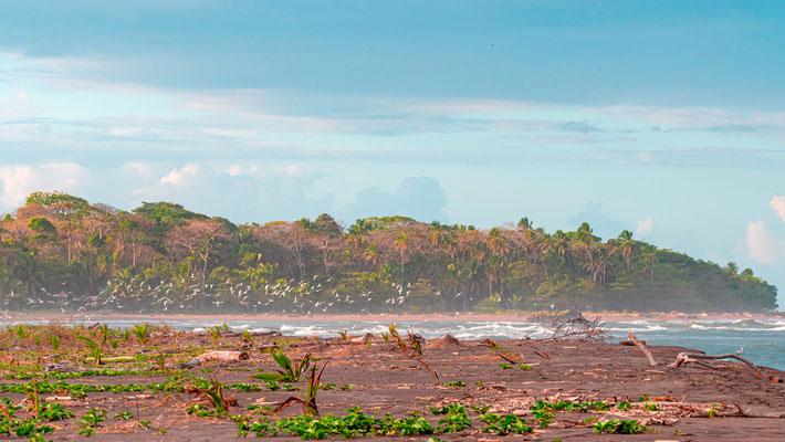 Canal de Tortuguero rejoignant l'océan