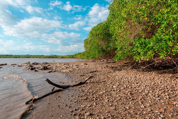 Mangrove à la Enseneda
