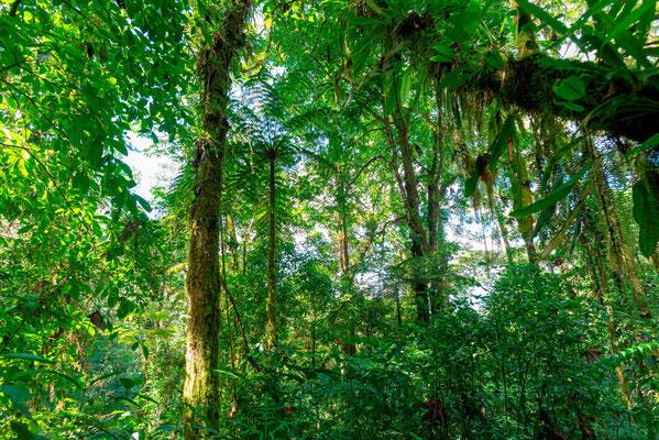 Forêt secondaire à Arenal