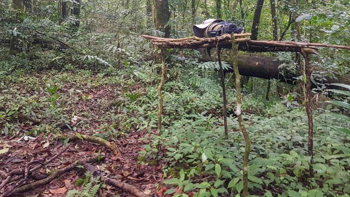 Camp de base au cœur de la forêt! Que du bonheur!