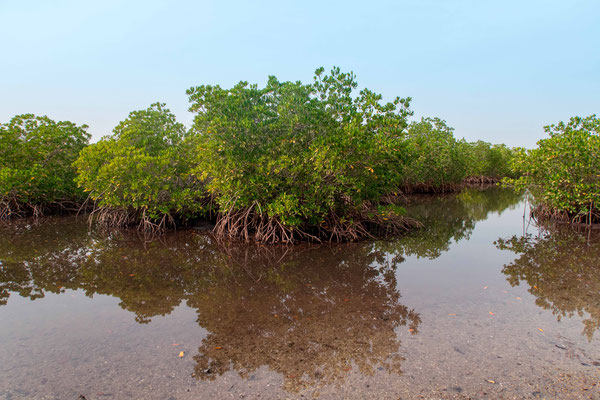 Mangrove de Soucouta
