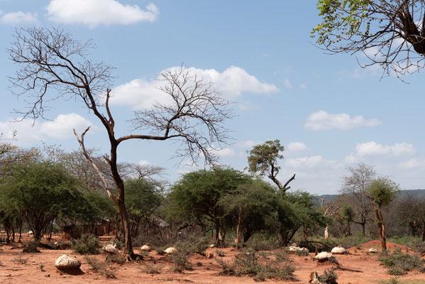 Wooded savannah north of Negele