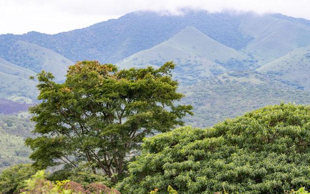 Vue sur le parc national des Uzungwa